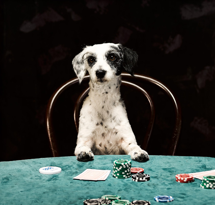 perros jugar poker