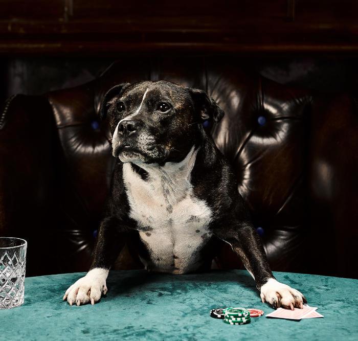 perros jugando al poker