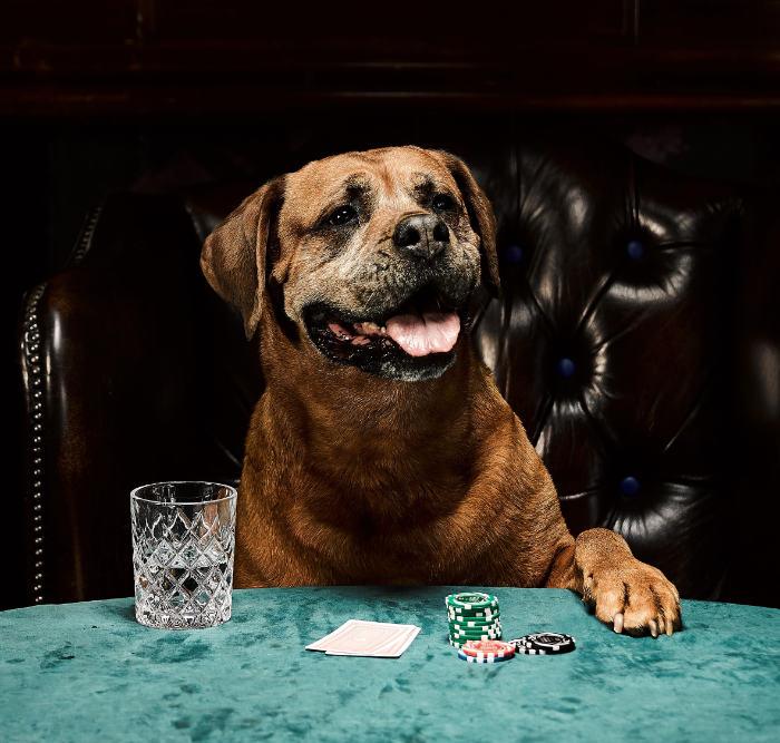 perros juegan al poker